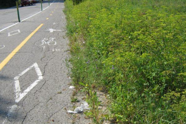 Développement d'une méthode de cartographie du risque de présence d'herbe à poux