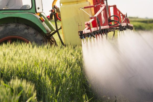 Décontaminer les eaux polluées par des pesticides