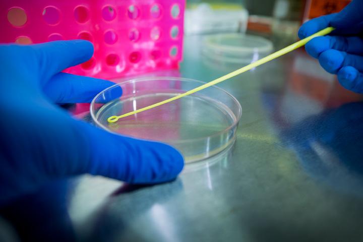 Viser juste grâce aux molécules biohybrides