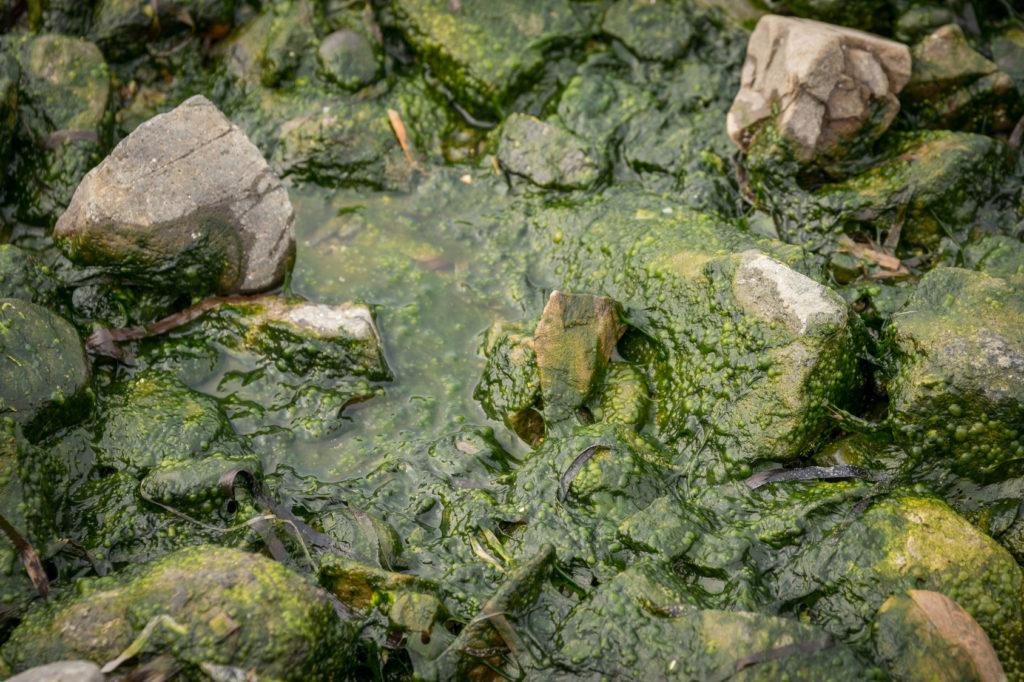 Recherche Biogeochimie aquatique Eutrophisation inrs