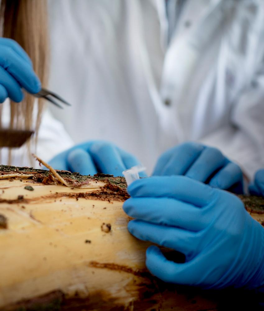 Microbiologie de l'environnement