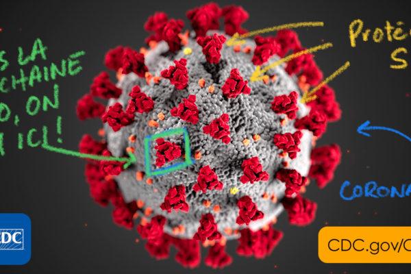 Comment une protéine du coronavirus lui permet d'infecter nos cellules