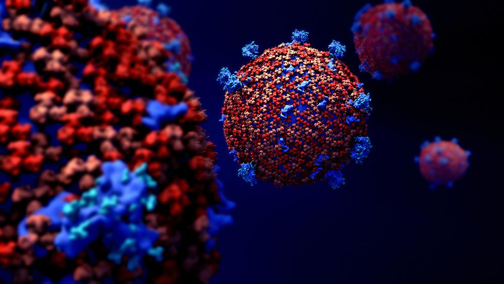 Des recherches pour un antiviral à large spectre contre les coronavirus