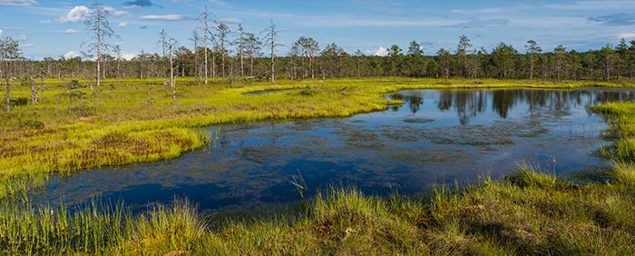 Les zones humides : nos chercheurs en action!