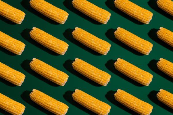 L'affaire des OGM : les dangers de la collusion entre chercheurs et médias