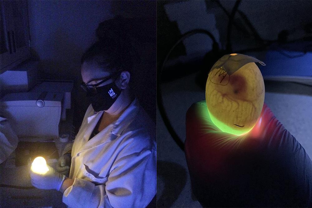 Ma recherche en série : le doctorat en écotoxicogénomique de Sarah Wallace