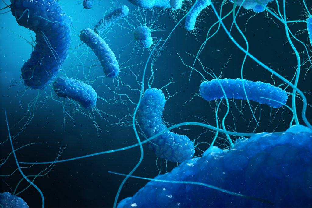 Représentation 3D des bactéries Escherichia coli (E. coli).