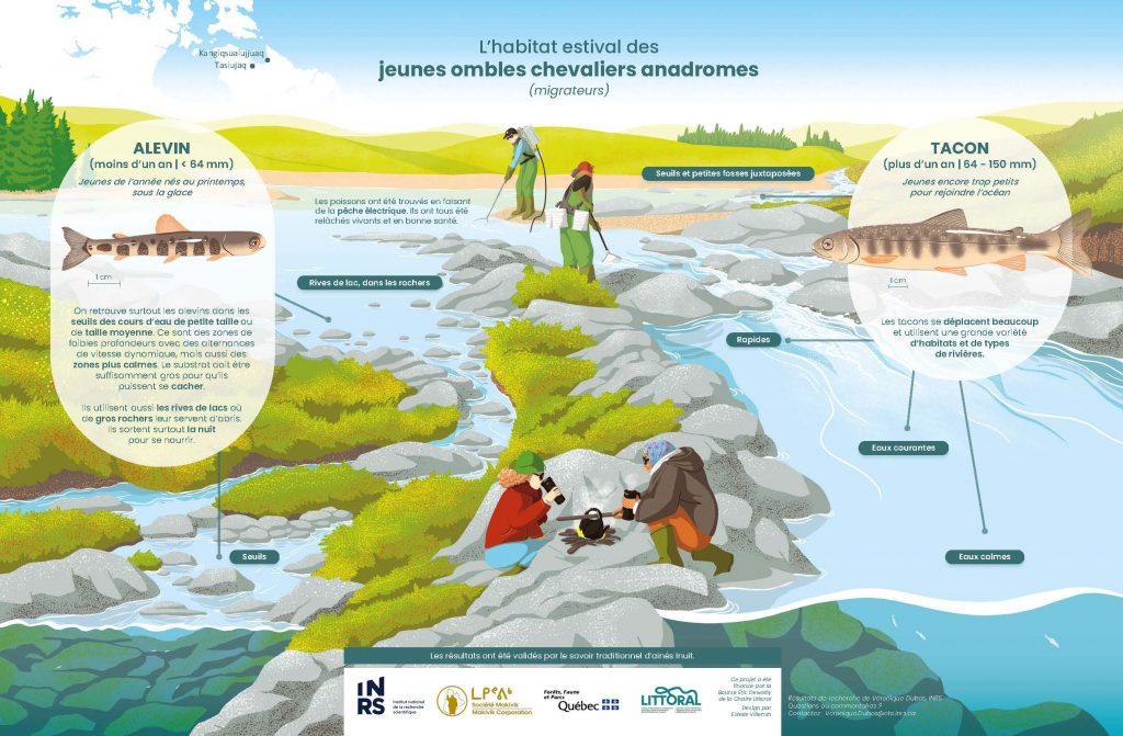 Illustration des préférences d'habitat des ombles chevaliers juvéniles.