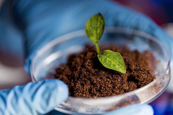 L'ingénierie du microbiote des plantes