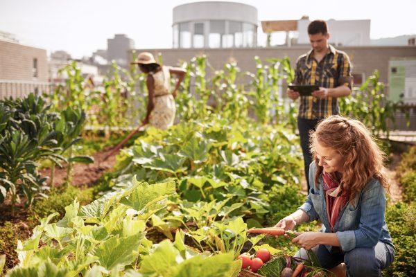 L'agriculture urbaine, de l'initiative citoyenne à la réglementation politique