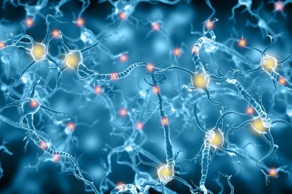 Antioxydants : une piste dans la prévention de la maladie d'Alzheimer
